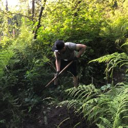 Volunteers doing trail work in a lush green forest surrouding by ferns