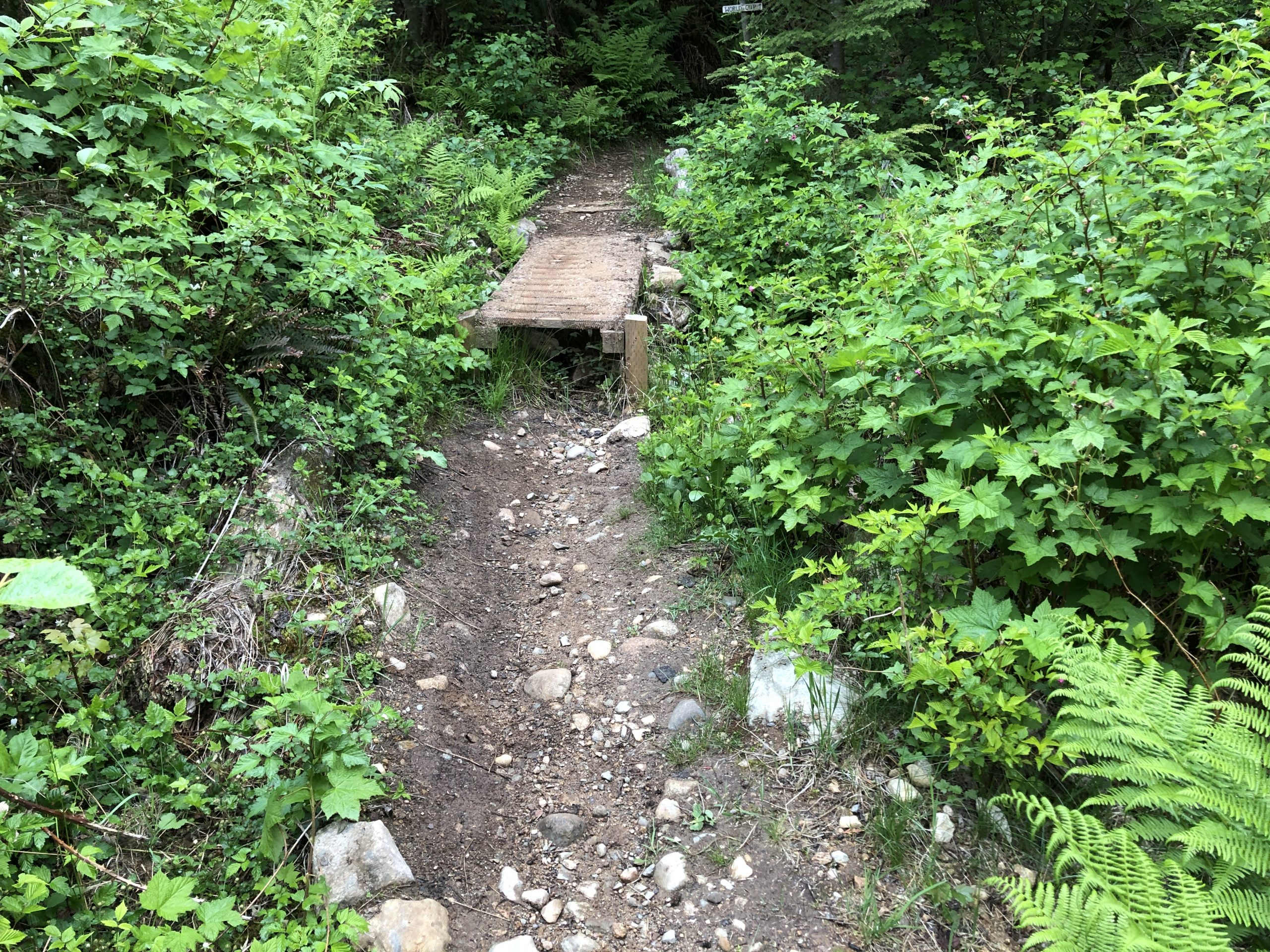 A small wooden bridge on a trail