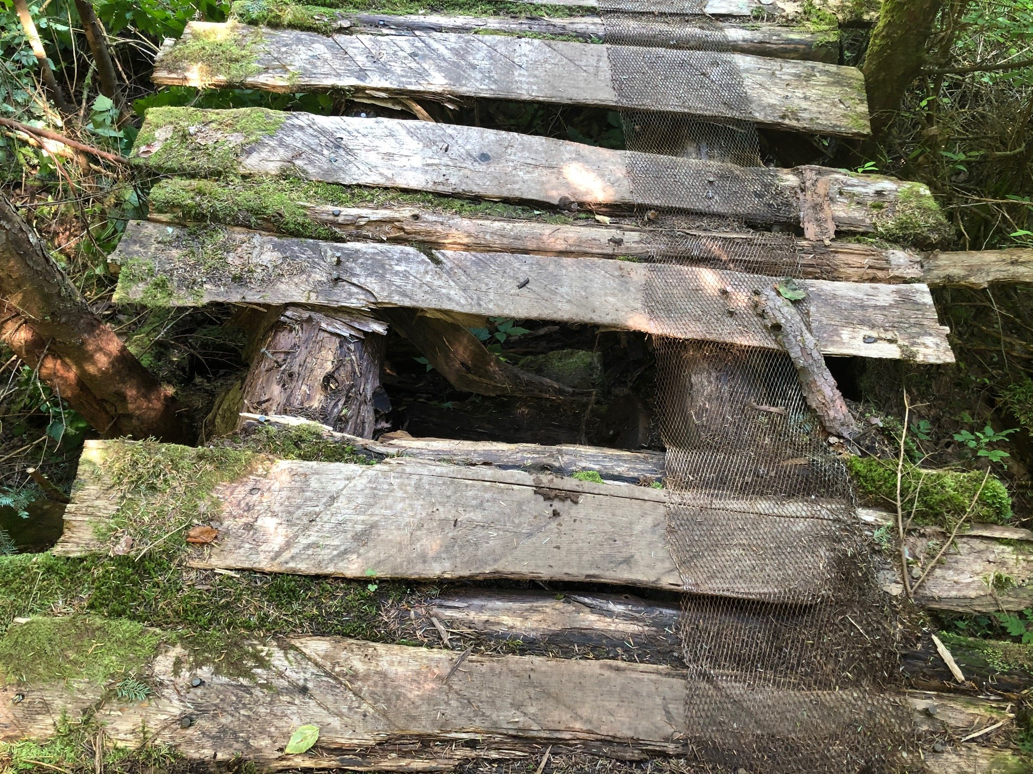 An old wood bridge on a trail missing a piece of decking
