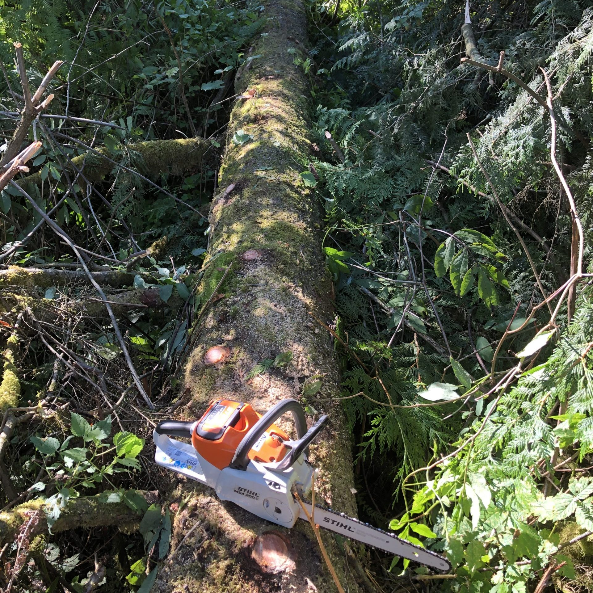 A fallen fir tree trimmed of its branches ready to be amde into a log ride