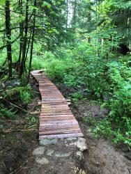 Image of a boardwalk made from fresh split cedar through a lush green forest