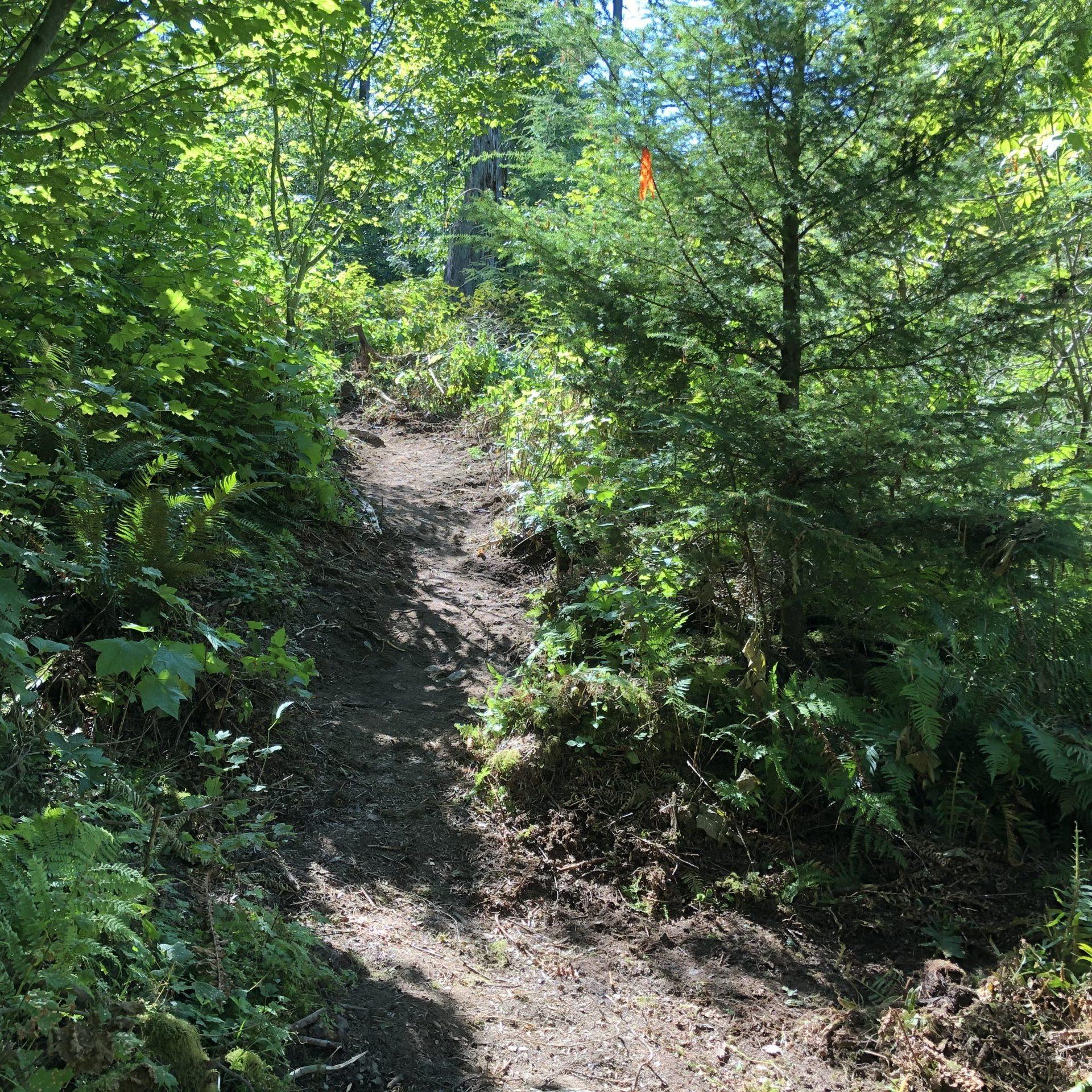 A dirt trail in dappled sunlight
