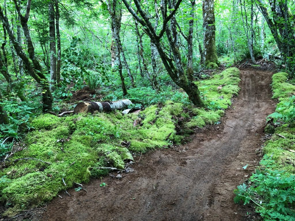 A dirt trail like a brown ribbon in a lush green forest with moss and ferns lining the side