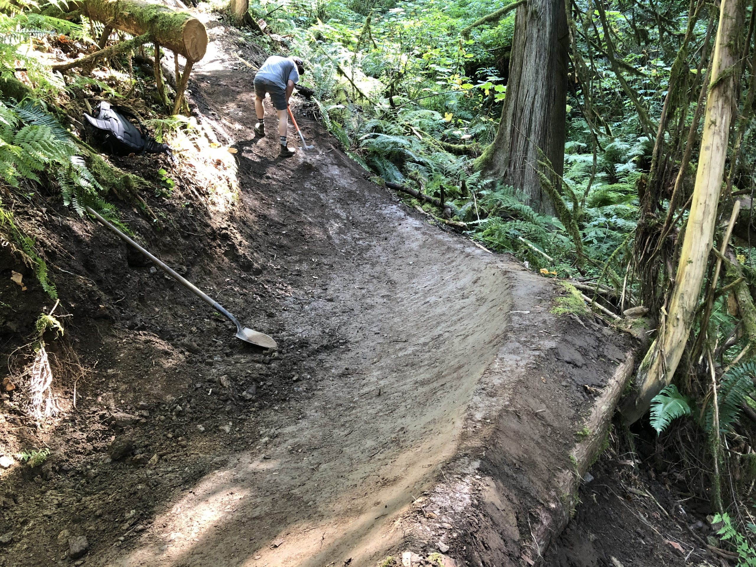 A freshly built smooth berm on a forested trail