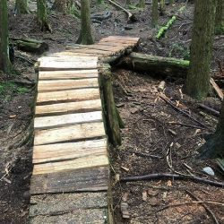 A wooden ramp over a log on a trail in the woods.